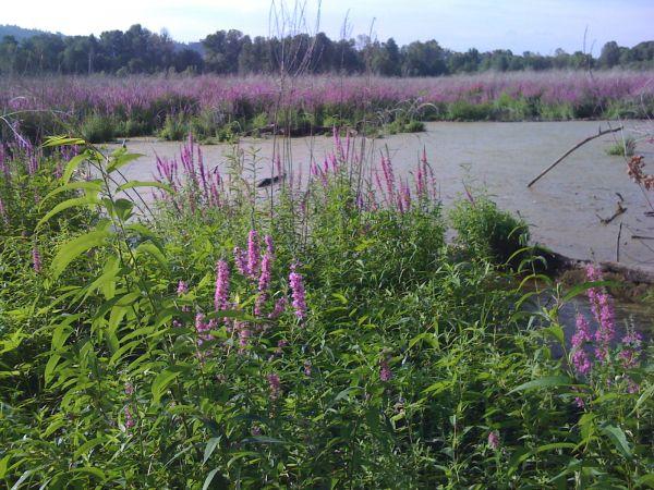 WetlandsMed